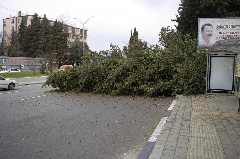 ВСочи наостановку социального транспорта рухнуло дерево