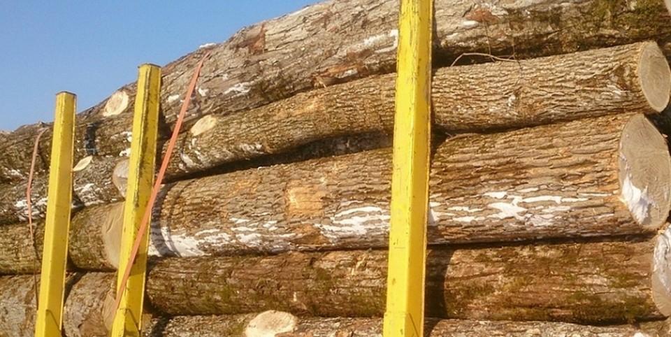 ВПриморье окончено  следствие поделу онезаконной заготовке древесины