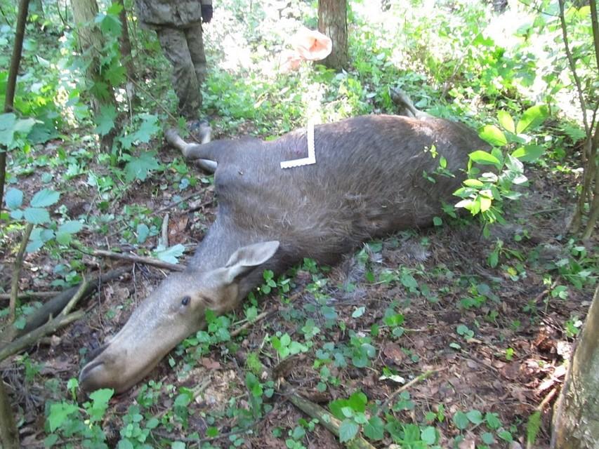 Убийство лося оценили в200 000 руб.