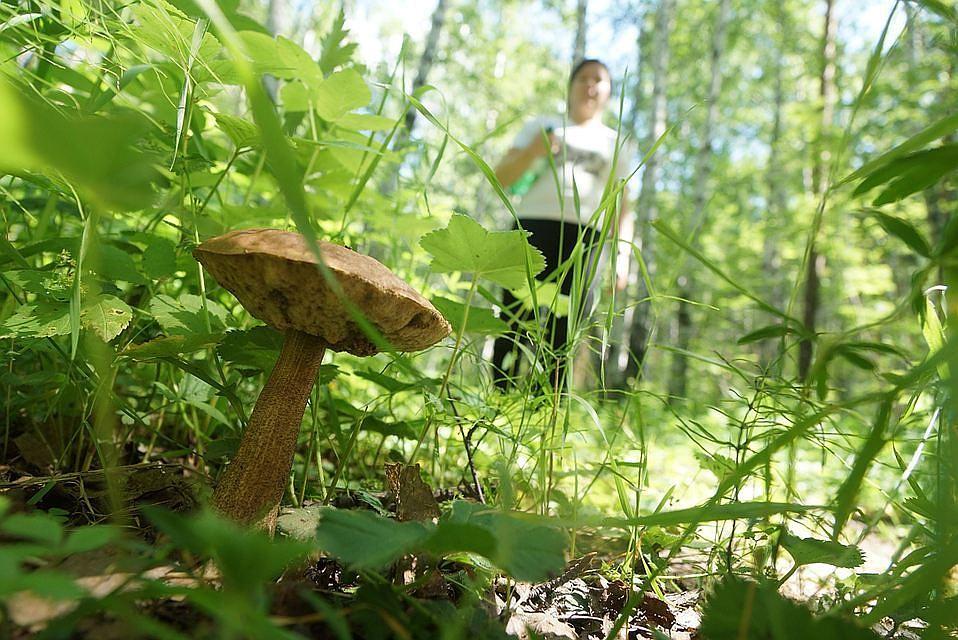ВЧелябинской области отыскали пропавшего три дня назад грибника