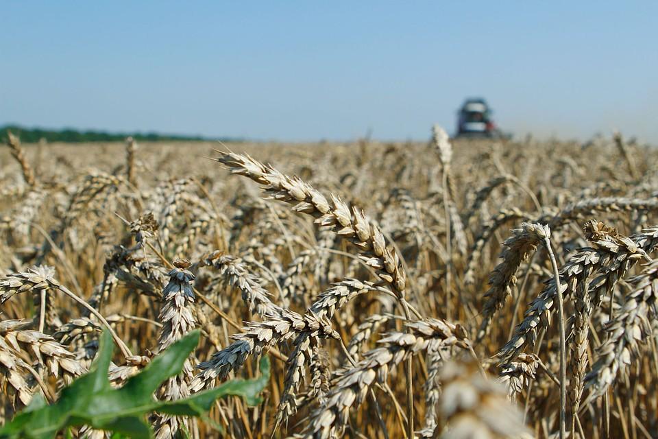 НаСтаврополье собрано 4,7 млн. тонн зерна— Кавказ Сегодня