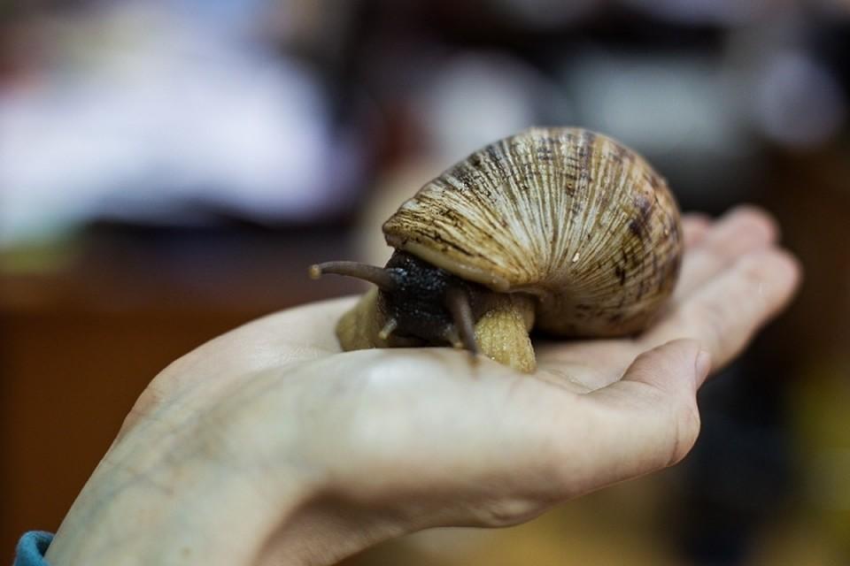 «Труп морской свинки вморозилке»: калининградский контактный зоопарк закрыли на3 месяца