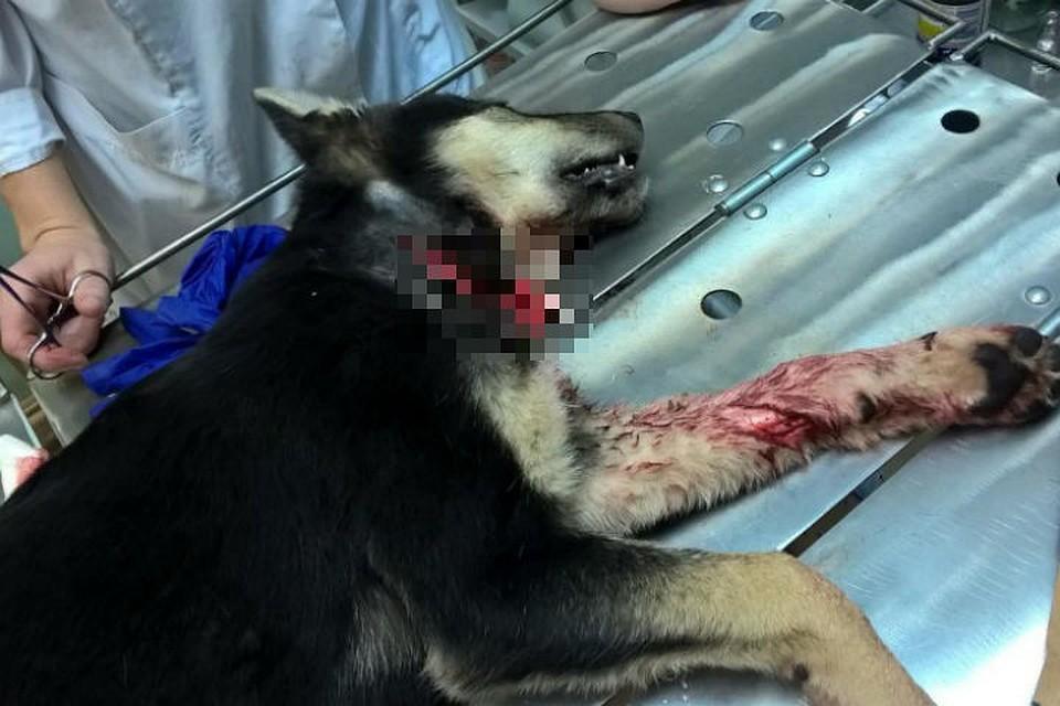 ВДивногорске мужчины наглазах детей истязали щенка