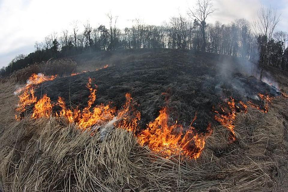 Рослесхоз предупредил овысокой пожарной опасности на далеком Востоке