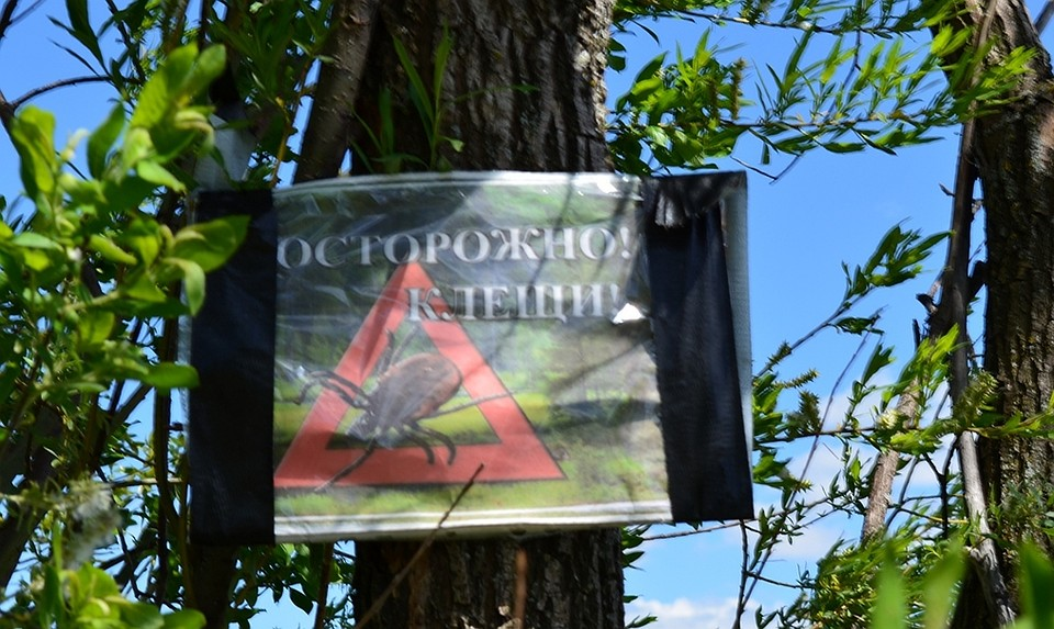 Роспотребнадзор: ВТатарстане вновь активизировались клещи
