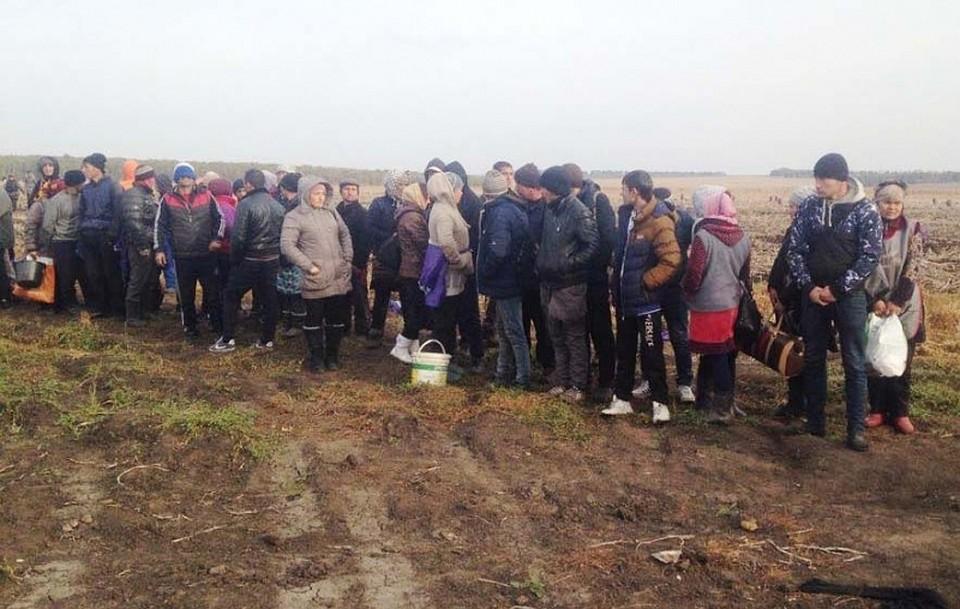 ВВоловском районе Тульской области наполях работали 82 мигранта