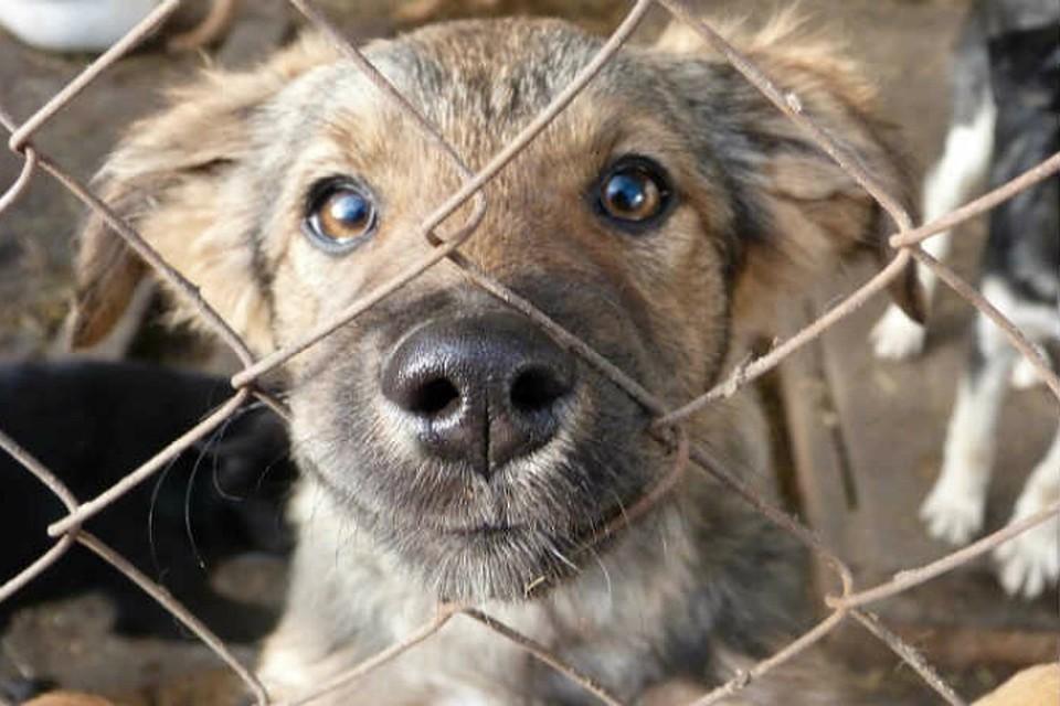 ВОмске догхантеры убили собак вгородском парке