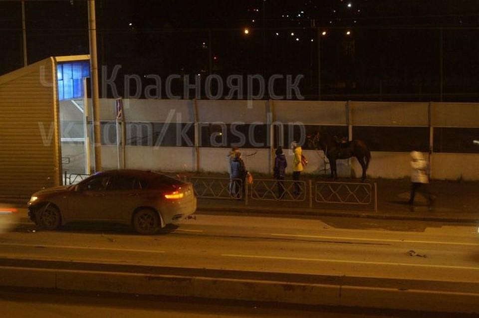 Автоледи на БМВ сбила коня напроспекте Свободный