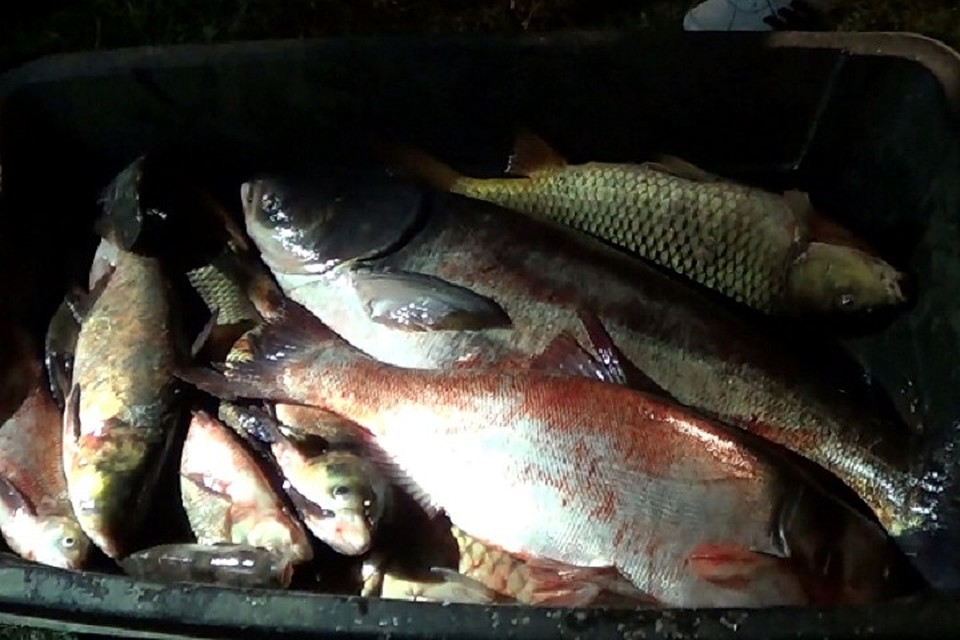 Убраконьеров вЗаинске изъяли неменее тонны рыбы