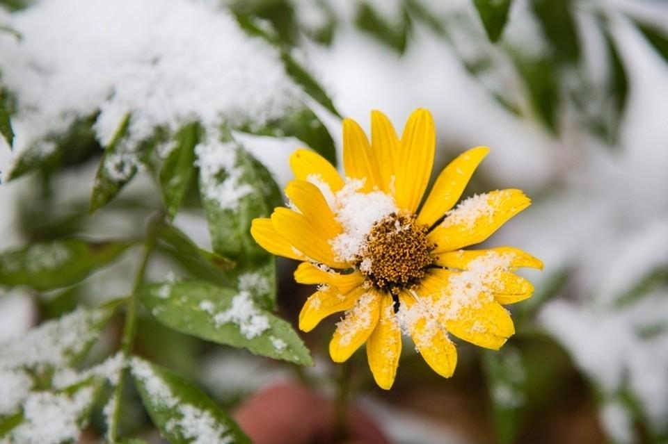 ВБашкирии похолодает до-11°С— Гидрометцентр