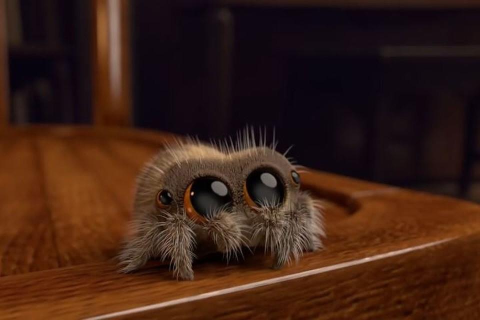 Пушистый паук, накоторого не ужасно смотреть— Лукас