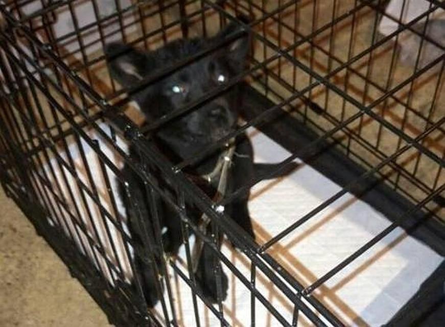 Работники аэропорта Кольцово спасли щенка, брошенного пассажиром