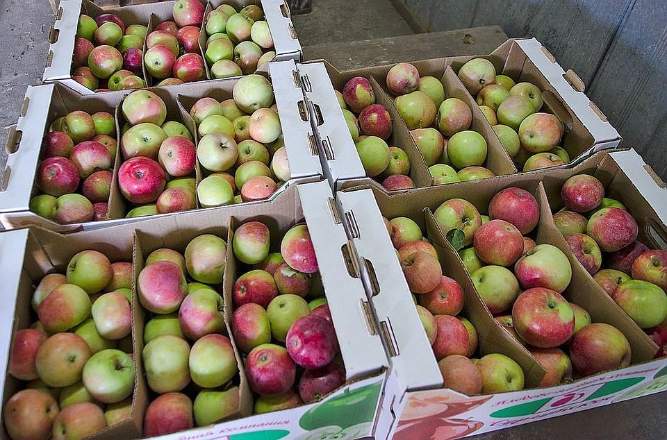 ВРТ уничтожили 5 тонн санкционных продуктов