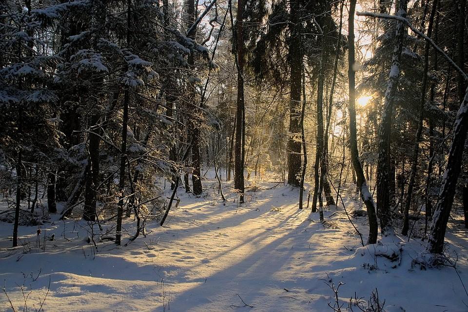 Кировские полицейские спасли замерзавшего влесу мужчину
