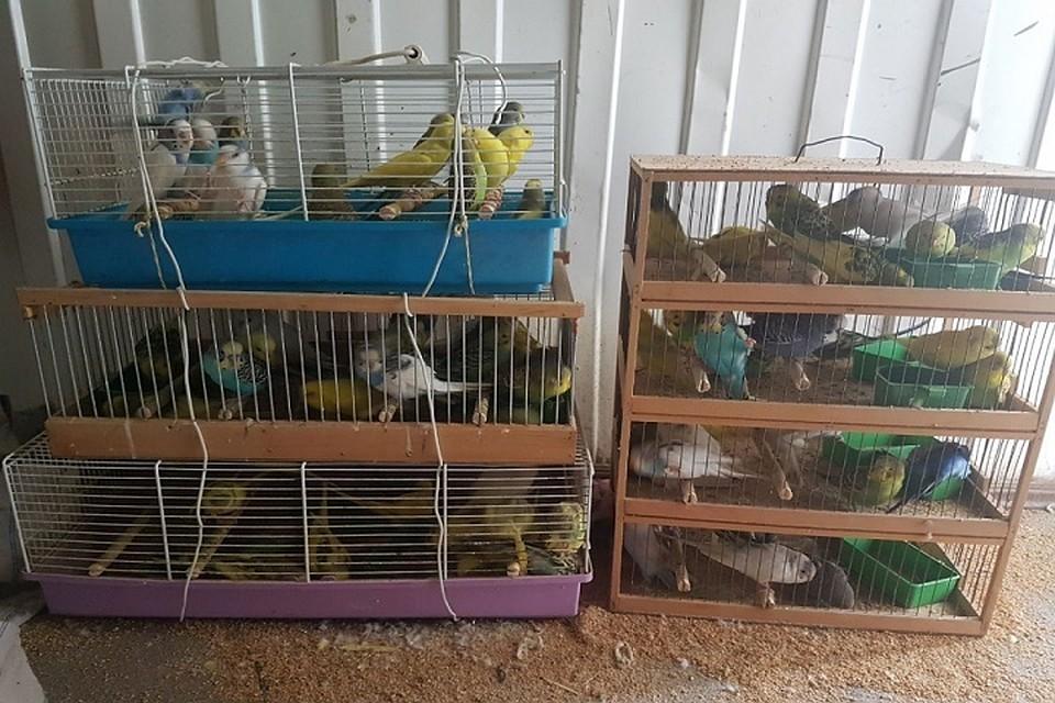 ВРФ таможенники непустили 100 волнистых попугаев изТаджикистана