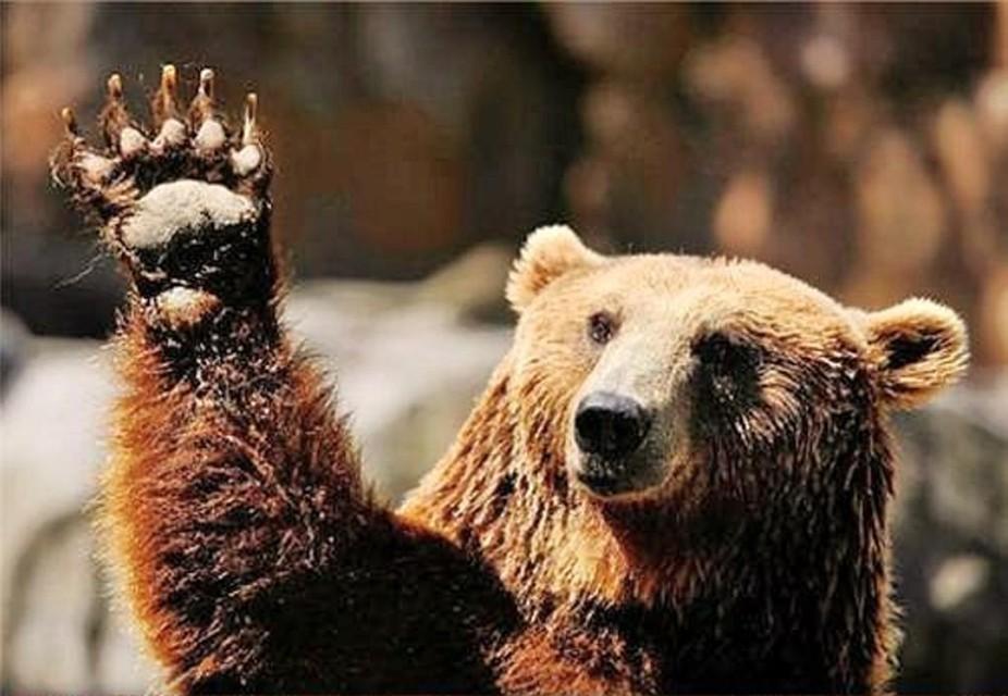 Медведь вМинском зоопарке проснулся из-за аномально теплой зимы