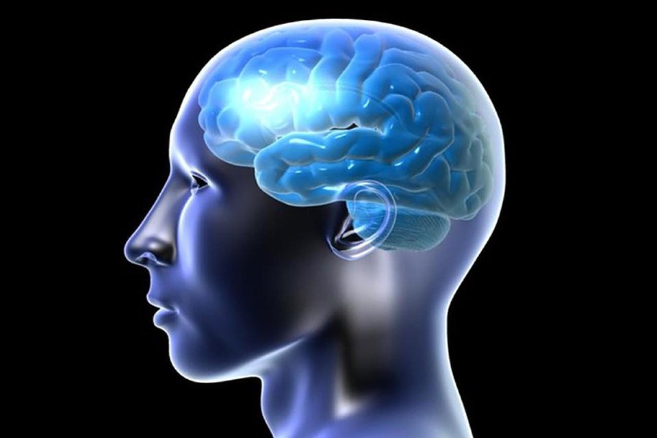 Ученые отыскали способ улучшать память людей