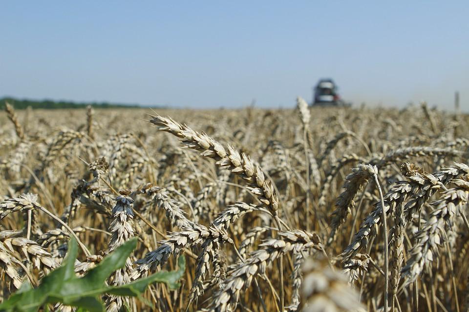 Фермеры наСтаврополье получат 817 млн руб. господдержки