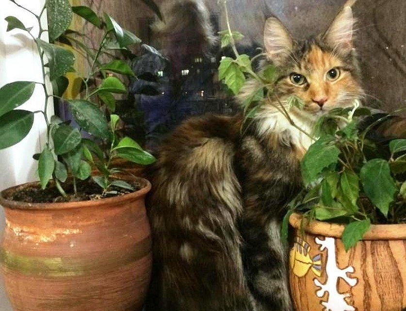 Размещен топ пород кошек поверсии граждан Воронежа