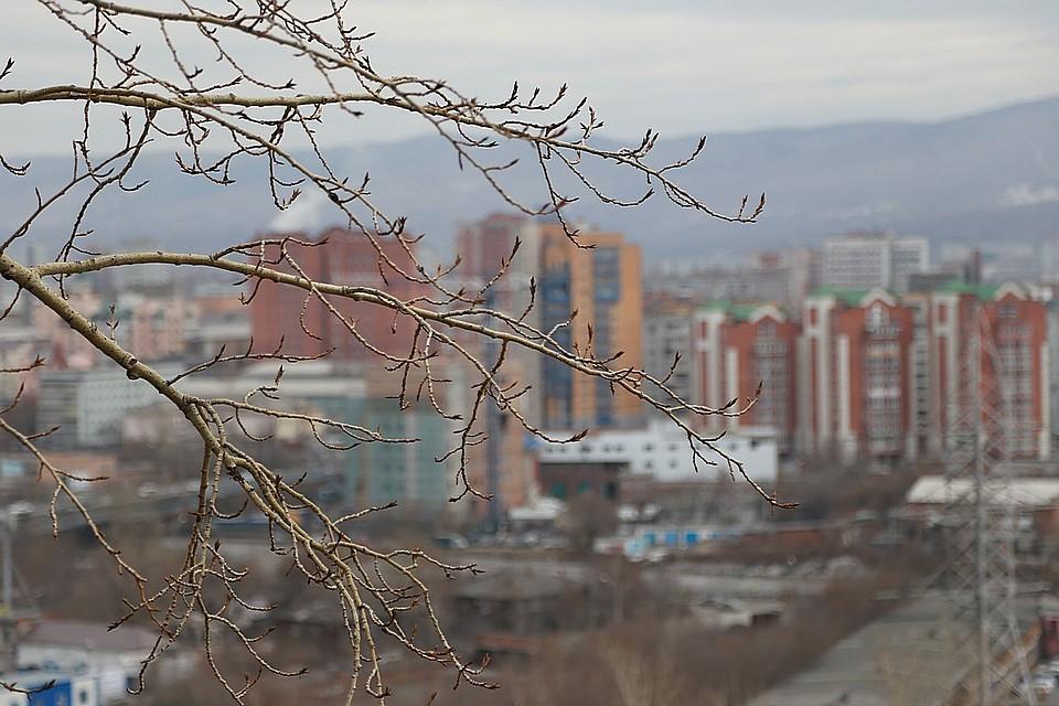 ВКрасноярске высадят 12 тыс. деревьев