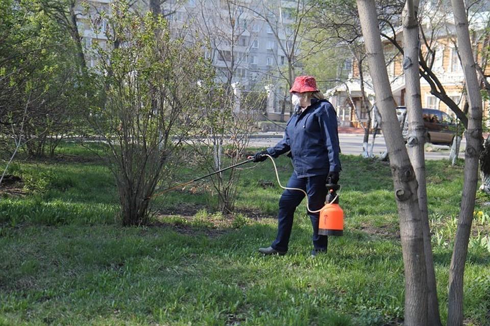 Клещи покусали неменее 89 тыс. граждан России ссамого начала сезона