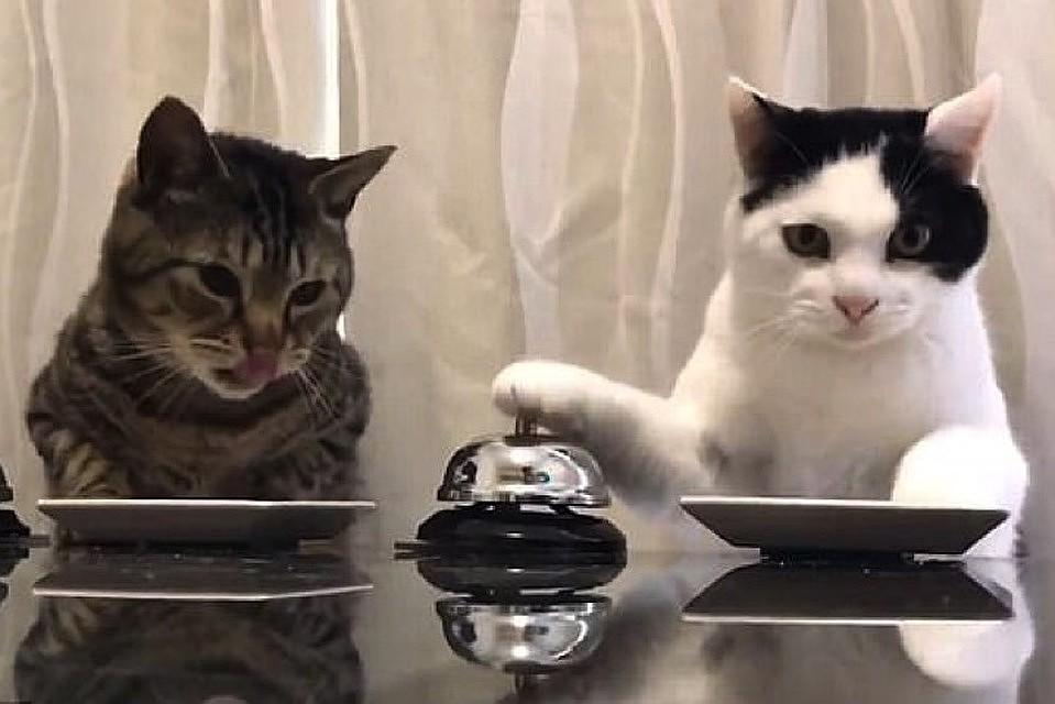 ВТольятти запретили заводить неменее 2-х кошек и 2-х собак