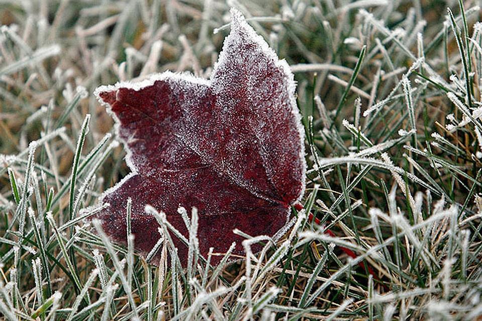 В Беларуси сегодня ночью будут заморозки.