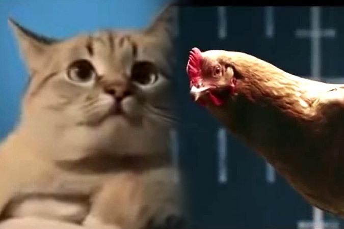 """Кошки против кур: """"АвтоВаз"""" ответил «Мерседесу» смешной рекламой"""
