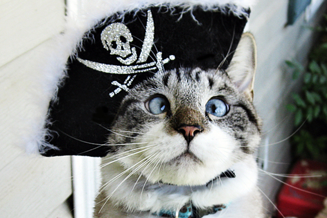 Очаровательный косоглазый котяра Спанглс стал настоящей интернет-сенсацией.