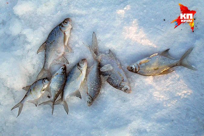 ловля рыбы новосибирск