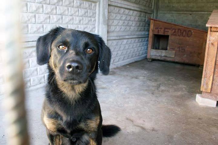 В Миорах объявили месячник уничтожения собак.