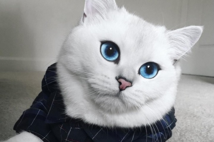 Фото: страница кота Коби в Instagram