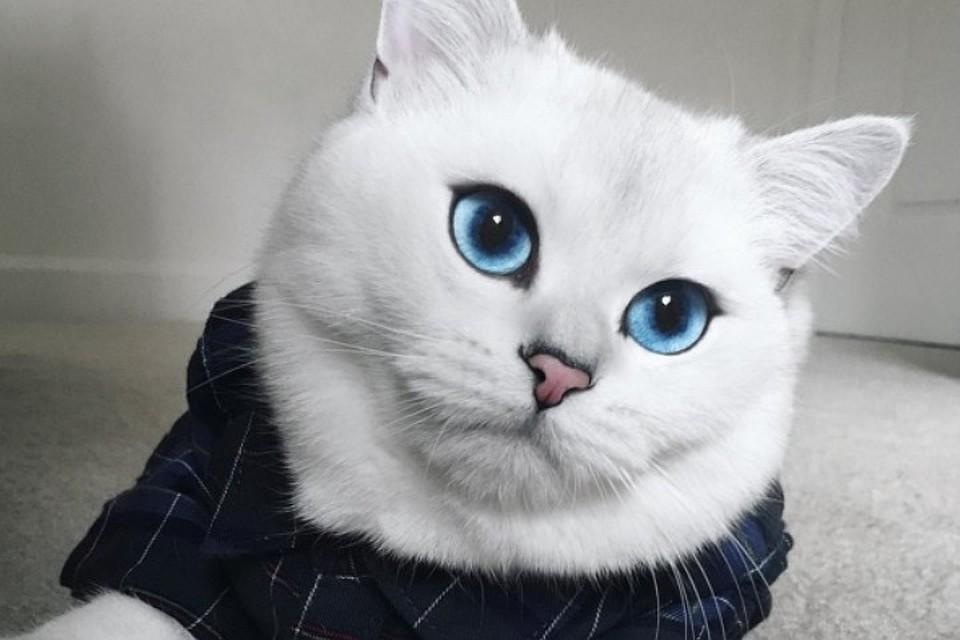 Кот с самыми красивыми глазами в мире стал интернет-звездой