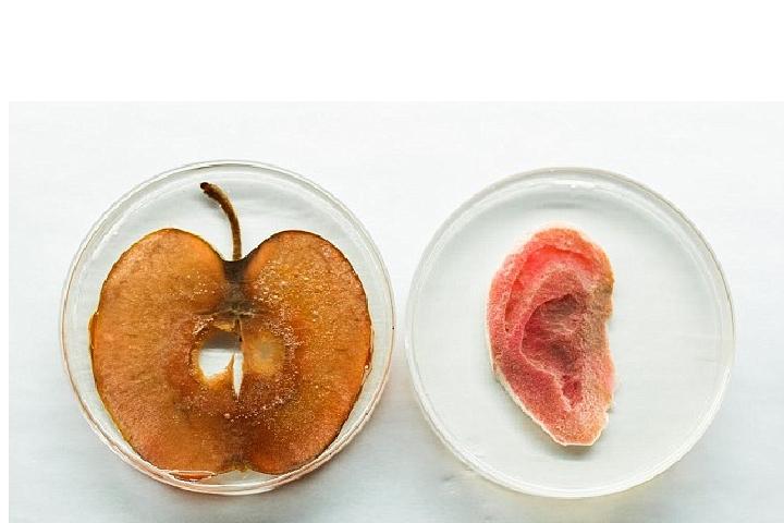 Яблоки изначально чем-то похожи на уши.