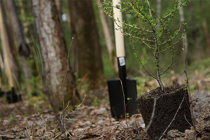 Созданием лесопарковых поясов могут заняться некоммерческие организации, а также городские власти.