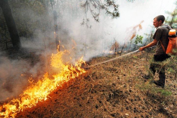 Засутки количество лесных пожаров вТомской области возросло до 9-ти