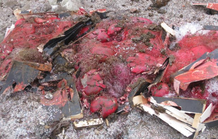 ВВоронежской области уничтожили 100кг незаконных испанских гранатов