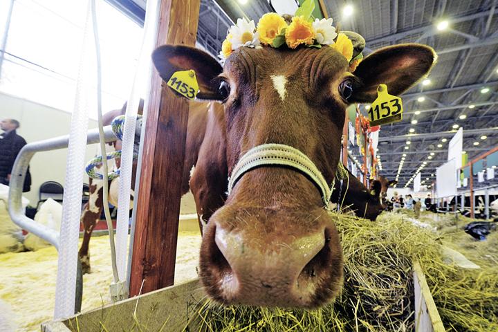 Один из самых популярных разделов выставки - животноводство.