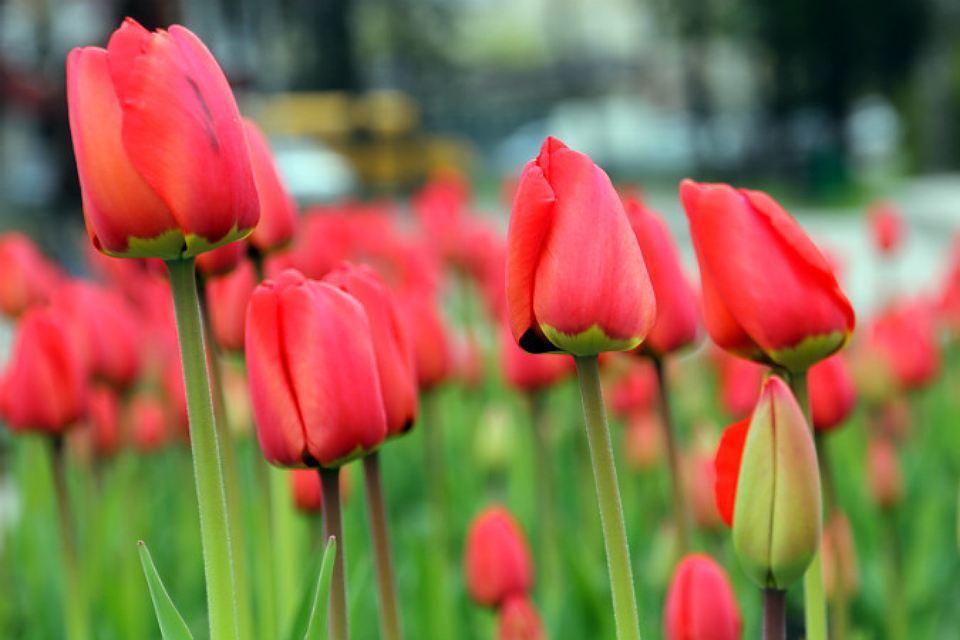 Весной ЦКПиО заиграет всему цветами радуги. Фото: Татьяна Черникова