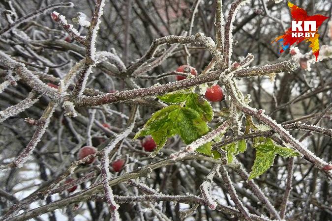 До конца недели зимы в Беларуси не будет.