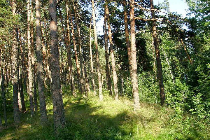 Финны находятся на четвертом месте среди стран ЕС по числу земельных владений за границей.