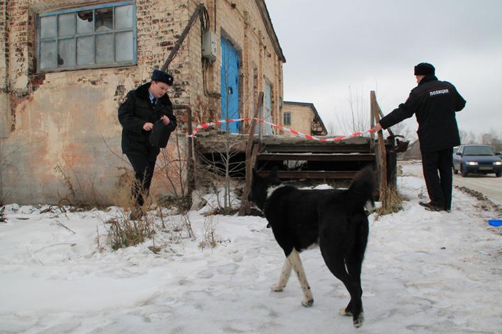 В Нижнем Новгороде начали разбирать холодильник собачьего концлагеря на Левинке.
