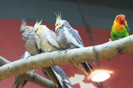Фото: пресс-служба Белгородского зоопарка
