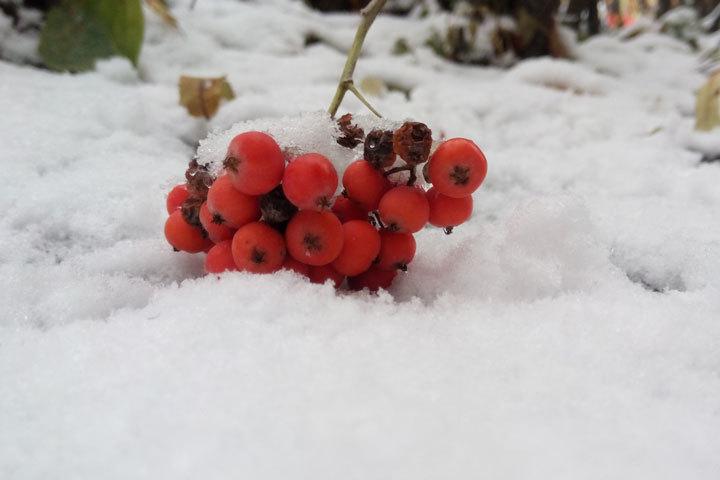 В ближайшие дни в Белгородской области будет идти снег.
