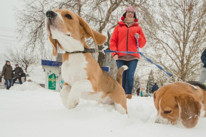 Впарке «Зеленый остров» возникла площадка для выгула идрессировки собак