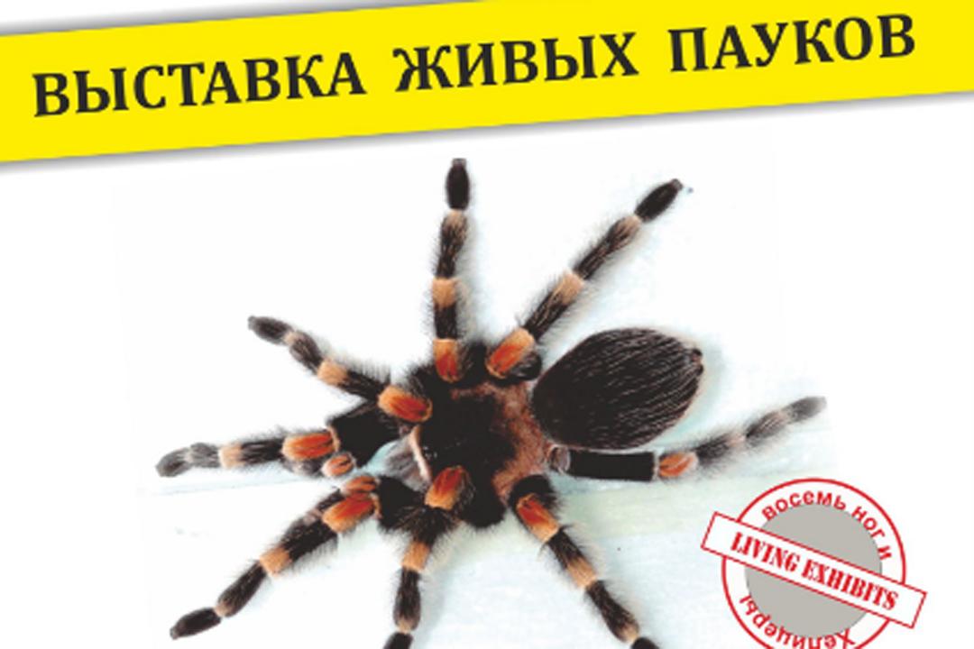 семья пауков фото