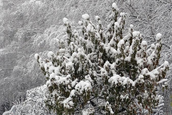 2 января в Югре будет снежным и ветреным