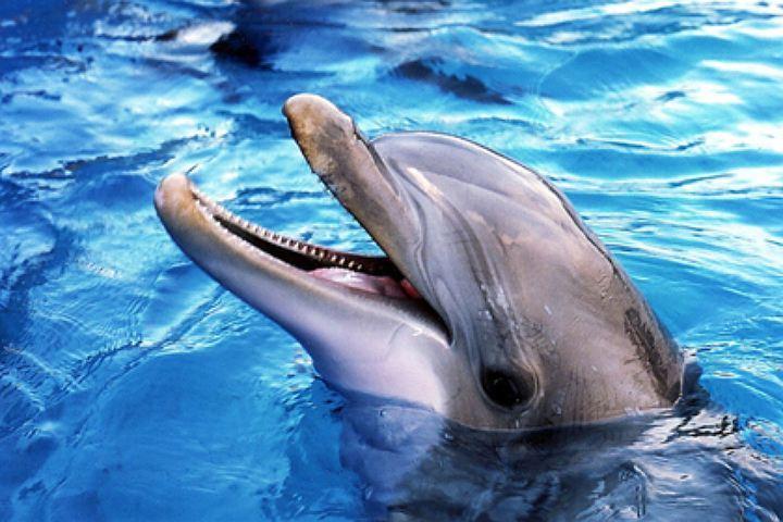 Дельфин породы Афалина был замечен на севере Дании.