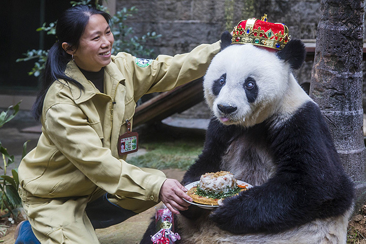 Старейшей вмире панде исполнилось 37 лет