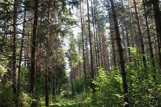 ВАпшеронском районе Краснодарского края был найден скелет мужчины